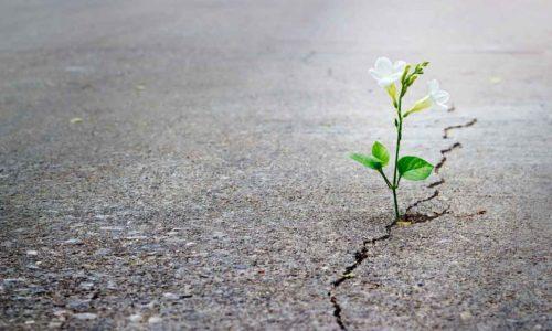 Tweede Kamer Wil Meer Aandacht Voor Palliatieve Zorg